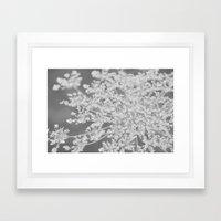 Apiaceae Framed Art Print