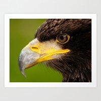 Intense Gaze of a Golden Eagle Art Print