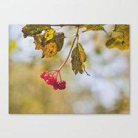 Berry Bokeh Fine Art Photographic Winter Print  Canvas Print