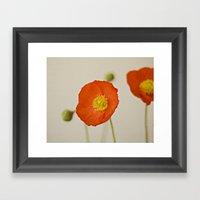 Poppy Flower Red Orange … Framed Art Print