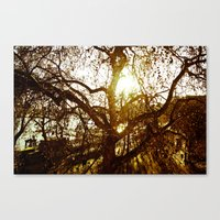 Tree see-through.... Canvas Print