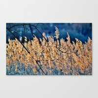 My Blue Reed Dream - Pho… Canvas Print