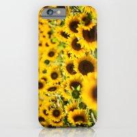 Through Fields of Light - Sunflowers iPhone 6 Slim Case