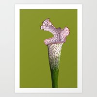 Pitcher Plant - Sarracen… Art Print
