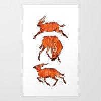 Bongo Antelope Art Print