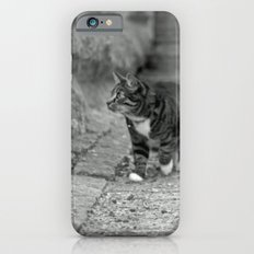 The cat in the alley iPhone 6s Slim Case