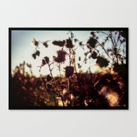 Evening Out In The Field… Canvas Print