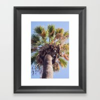 Palm Washingtonia 4099 Framed Art Print