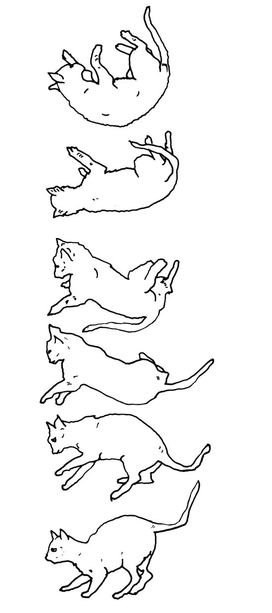 falling cat Art Print