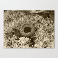 Acorn Cap Canvas Print