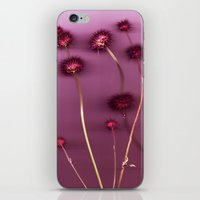 Purple Chia iPhone & iPod Skin