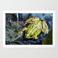 Frog In Pond Art Print