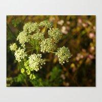 California Coast Floral … Canvas Print
