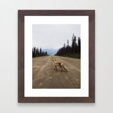 Road Fox Framed Art Print
