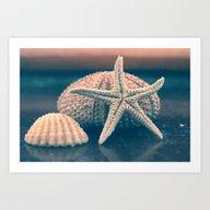 Seashells 4 Art Print