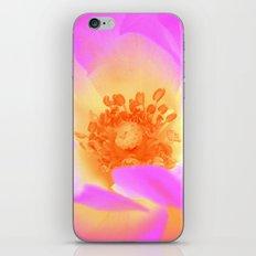 pink rose II iPhone & iPod Skin