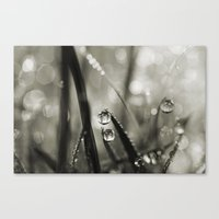 Rain Sparkles Canvas Print