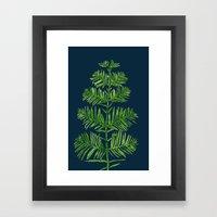 Dawn Redwood Framed Art Print