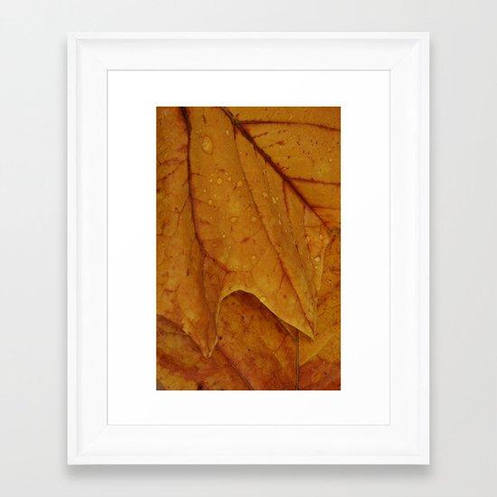 American Tulip Poplar Leaves Framed Art Print