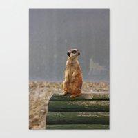 Meerkat No.1 Canvas Print
