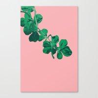 Branch Floripa Canvas Print
