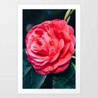 Wet Rose Art Print