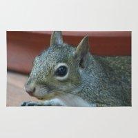 Baby Grey Squirrel Rug