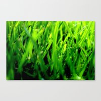 Get off my turf Canvas Print