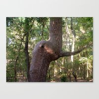 The Elephant Tree Canvas Print