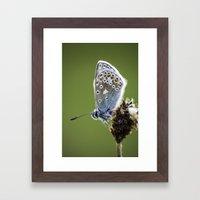 Common Blue Butterfly 2 Framed Art Print