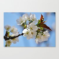 Now This Is Spring!  Canvas Print