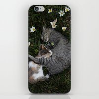 Sleep [A CAT AND A KITTE… iPhone & iPod Skin