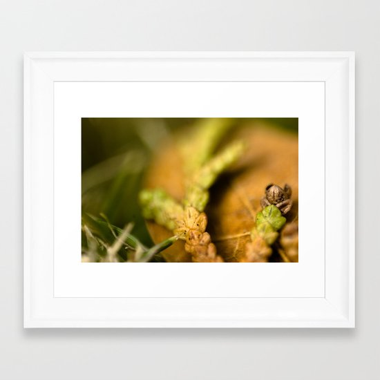 Tri Colored Pine Remains Framed Art Print