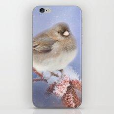 Winter Chill iPhone & iPod Skin