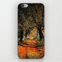 Autumn rust iPhone & iPod Skin