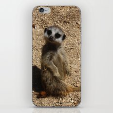 Meerkat iPhone & iPod Skin