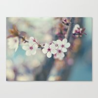 Cherry-tree Canvas Print