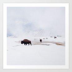 Wild Bison in Winter Art Print