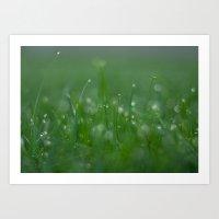 Morning Dew Drops On Gra… Art Print