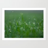 Morning Dew Drops on Grass Art Print
