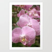 Orchid Ease Art Print