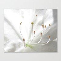 Spring White Canvas Print