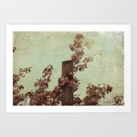 Faded Blossoms Art Print