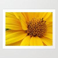 Sunny Yellow Art Print
