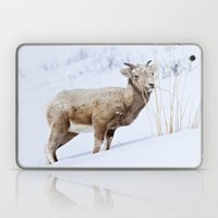 Big Horn Sheep In The Sn… Laptop & iPad Skin