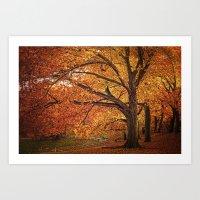 Oak Trees  Art Print