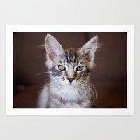Kitten Portrait 2596 Art Print