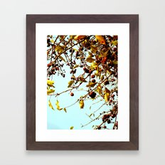 cherries in autumn Framed Art Print