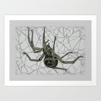 Noble False Widow Study Art Print