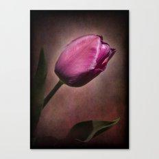 Imperial Tulip Canvas Print